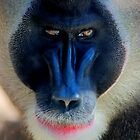 monkey looking right by dirk hinz