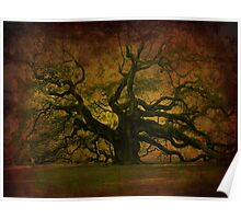 The Angel Oak in Charleston SC Poster