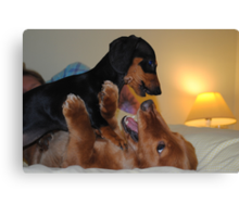 War of the Dachshunds Canvas Print