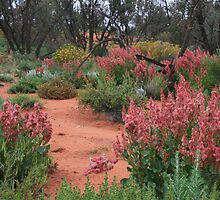 More desert Wid-flowers,near Roxby Downs,S.A. by elphonline
