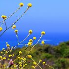 Big Sur Colors by cherylwelch