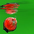 Red Fish in green ocean  by southmind