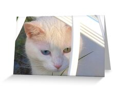 Kitten in Patterned Sunlight Greeting Card