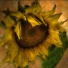 Sunflower Glowing by Marie Luise  Strohmenger