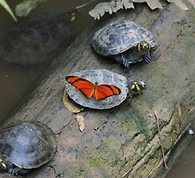 Turttle and Butterfly by Carol Bock