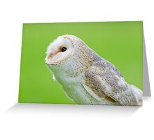 Pointer Owl  Greeting Card