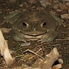 Sonoran Desert Toad (a.k.a Colorado River Toad) by Kimberly P-Chadwick