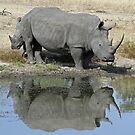 Silhouetted rhino mom and child in water hole! by jozi1