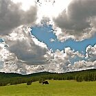 Tatonka - Black Hills, SD by jae1235