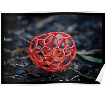 Red Cage Fungus  Poster