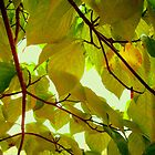 Canopy of Leaves by ctheworld