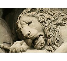 Crying Lion Photographic Print