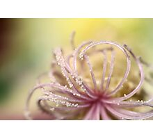 Pearly Curls Photographic Print