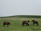 Home on the Range by Barberelli