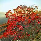 Autumn Fires       by kindangel