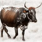 Nguni cow artwork by Peter Wickham
