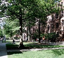 Yale University Commons Grounds by ellyd