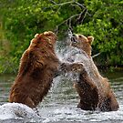 Brown Bear squabble by Michael S Nolan