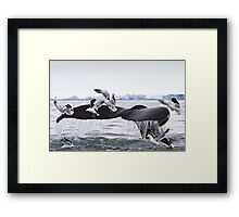 Humpback Whale going to the Birds! Framed Print