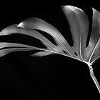 Leaves by bertadp