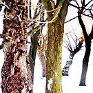 snowy walk by brian gregory