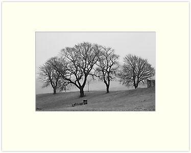 Trees In The Mist by Lynne Morris