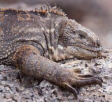 Hybrid Iguana by tara-leigh