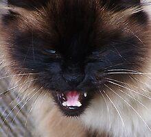 Grrrrrrrrr! by Jonice