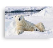 Curious polar bear Canvas Print