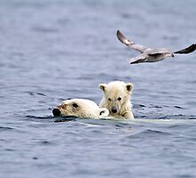 Swimming Ice Bear Mother and Cub by Michael S Nolan