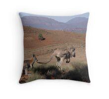 Roos at Flinders Rangers National Park, SA Throw Pillow