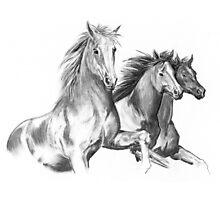 Three Horses Photographic Print