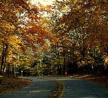 Country Road in Fall by BarbL