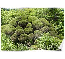 Topiary Poster