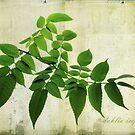 dahlia imperialis by Lorraine Creagh