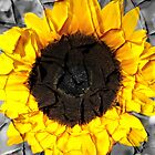 Peeling Sunflower by aruni