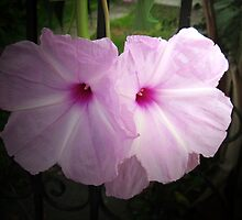 Pink Petunias behind an Iron Fence by mltrue