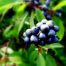 blue berries by Leeanne Middleton