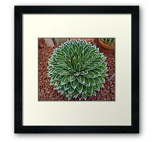 Queen Victoria Agave Framed Print