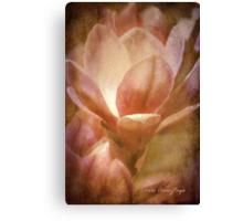 Magnolias 1 Canvas Print