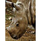 Ailsa The Baby Rhino. by Aj Finan