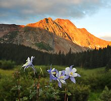 Colorado Columbine and red mountain by Catherine Ames