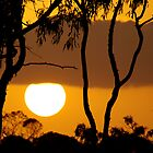 gumtree sunset, north queensland  by Brian Puckey