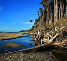 """fallen""    bruce bay, west coast, new zealand by rina  thompson"