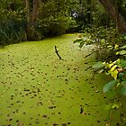 Green Backwater by Geoff Carpenter