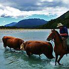 """territorial""    paringa river, south westland, new zealand by rina  thompson"