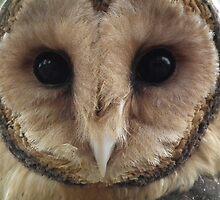 Australian Barn Owl by Bernie Stronner