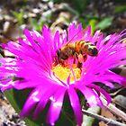 Caprobrotus flower and bee by WeblightStudio
