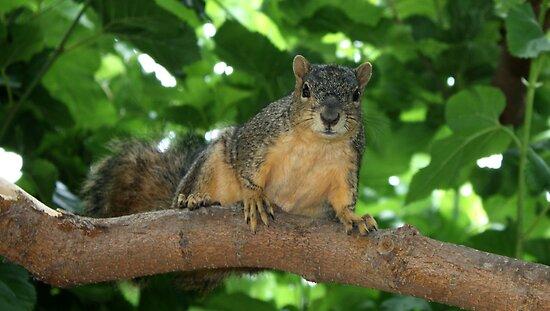 Squirrel Adventures by Bellavista2