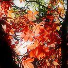 autumn by wistine